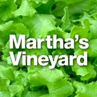 Salad-Martha-200x200